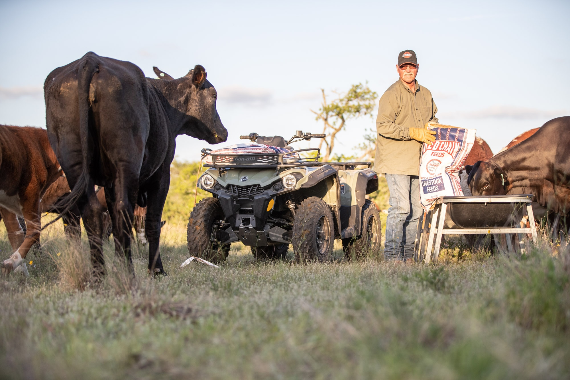 A Can-Am Outlander DPS ATV in a ranch surrounded by animals and a man