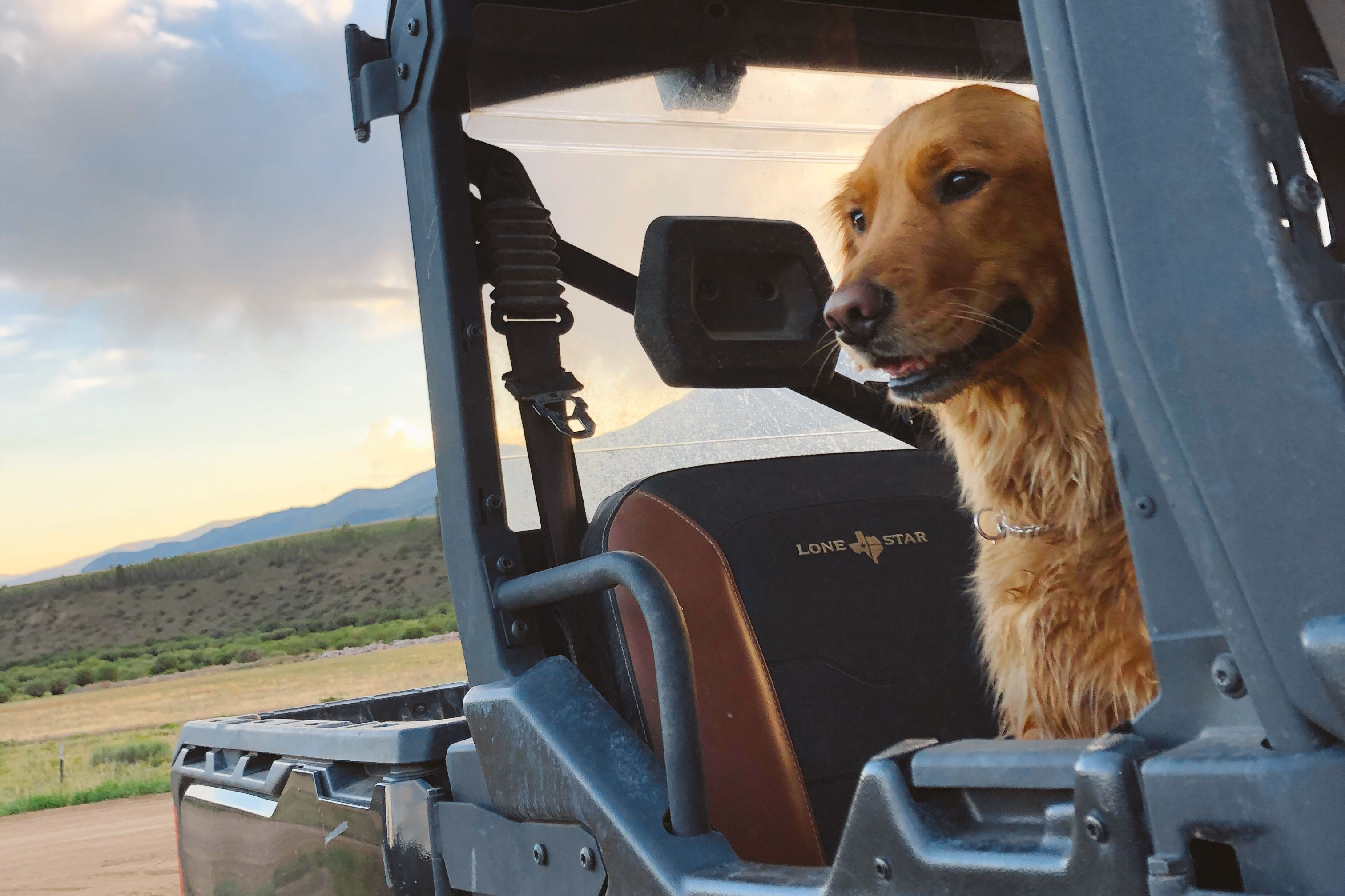 Close shot of a Red Retriever dog sitting in the back seat of a Can-Am Defender Lone Star