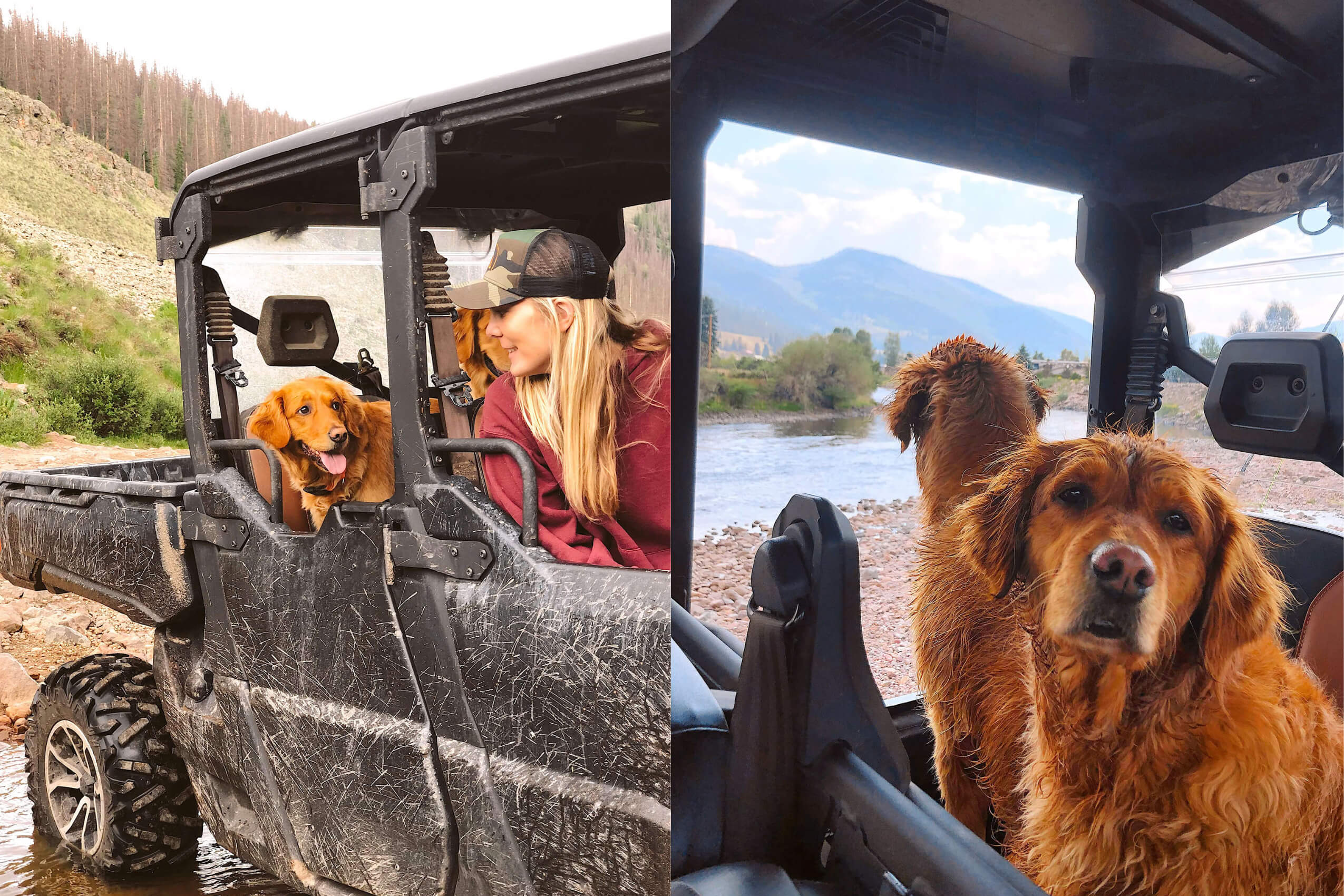 A collage of two pictures of Red Retriever dogs in a Can-Am Defender Lone Star side-by-side
