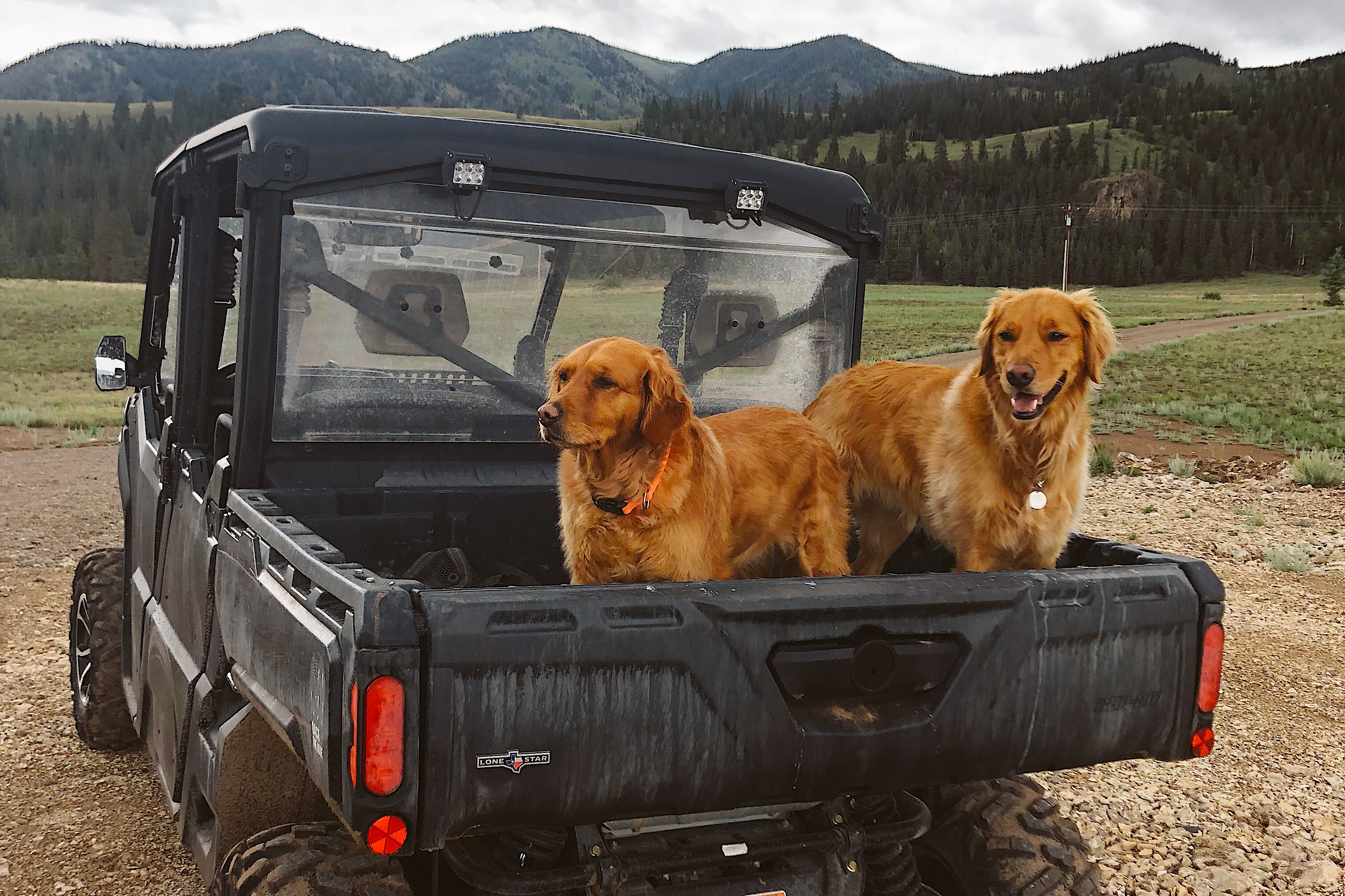 Two Red Retrievers dogs sitting on a Can-Am Defender cargo box