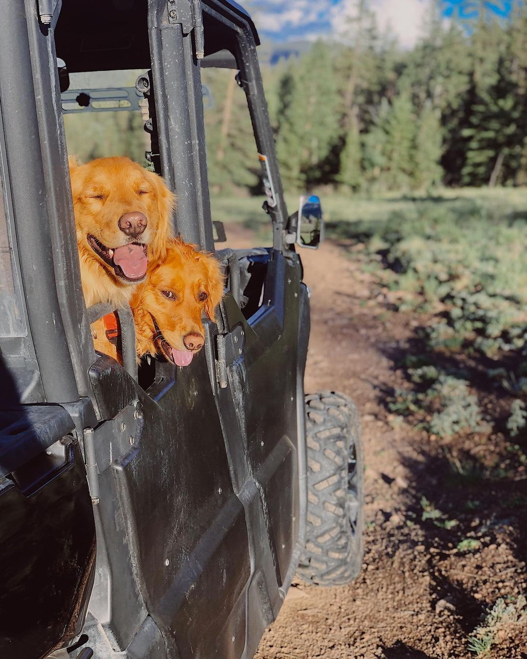 Two Red Retriever dogs with their head out of a Can-Am Defender side-by-side