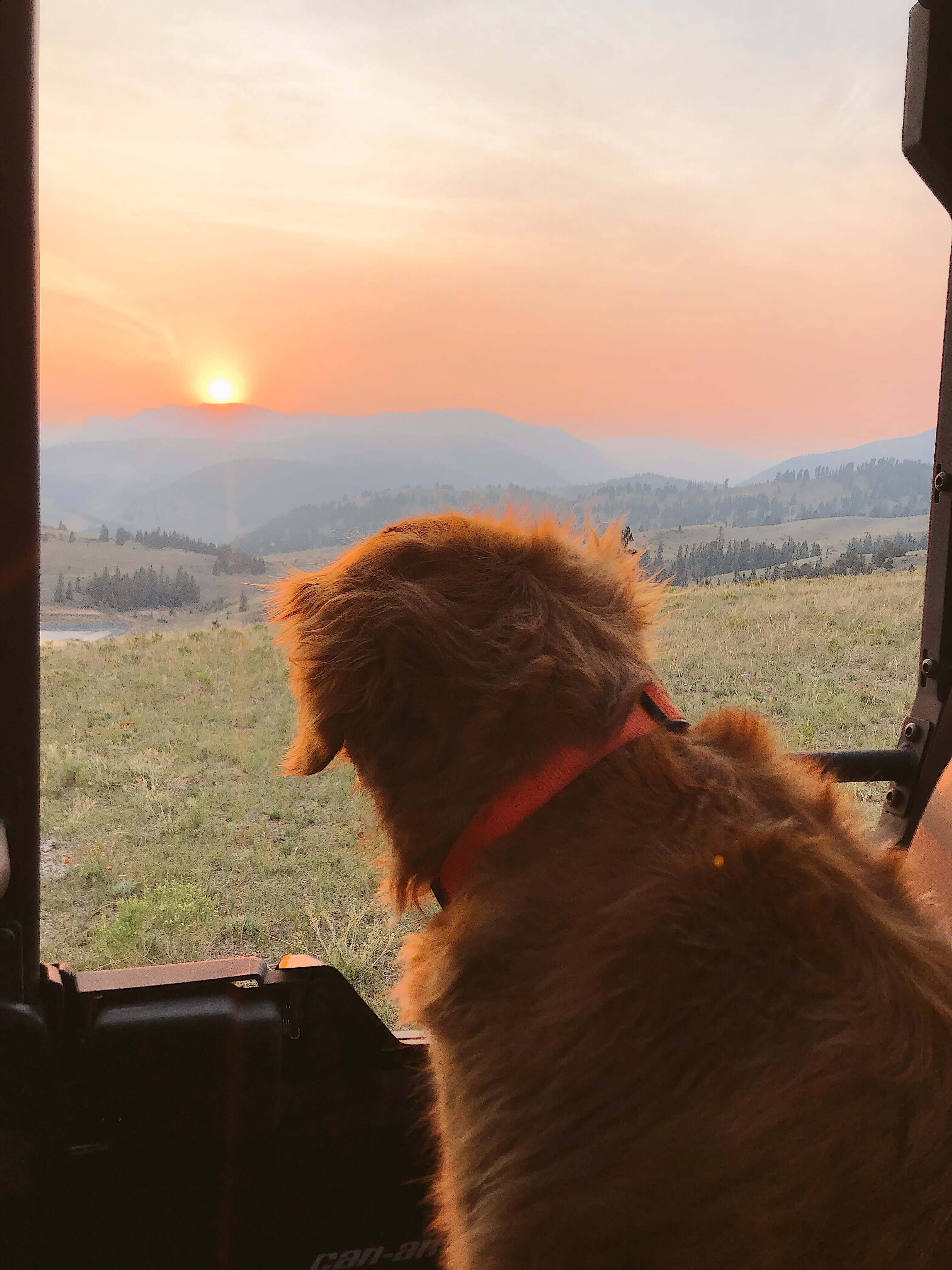 A dog enjoying the sunset inside a Can-Am Defender Lone Star side-by-side