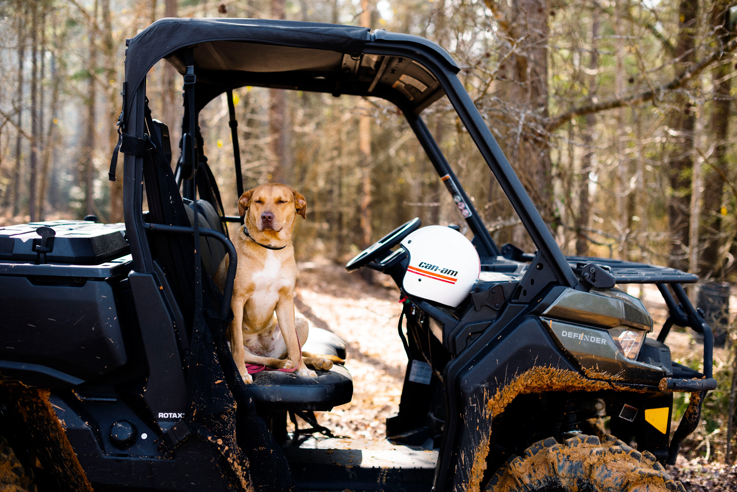 A dog sitting on the front seat of a Can-Am Defender Side by Side